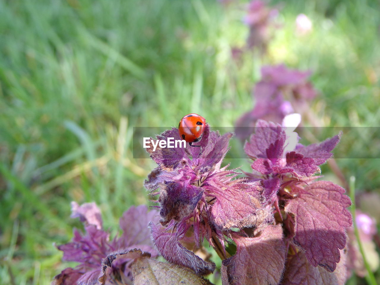 flowering plant, flower, animal themes, plant, animal, insect, beauty in nature, invertebrate, fragility, one animal, vulnerability, animal wildlife, animals in the wild, freshness, close-up, petal, growth, flower head, nature, no people, purple, pollination, pollen, butterfly - insect