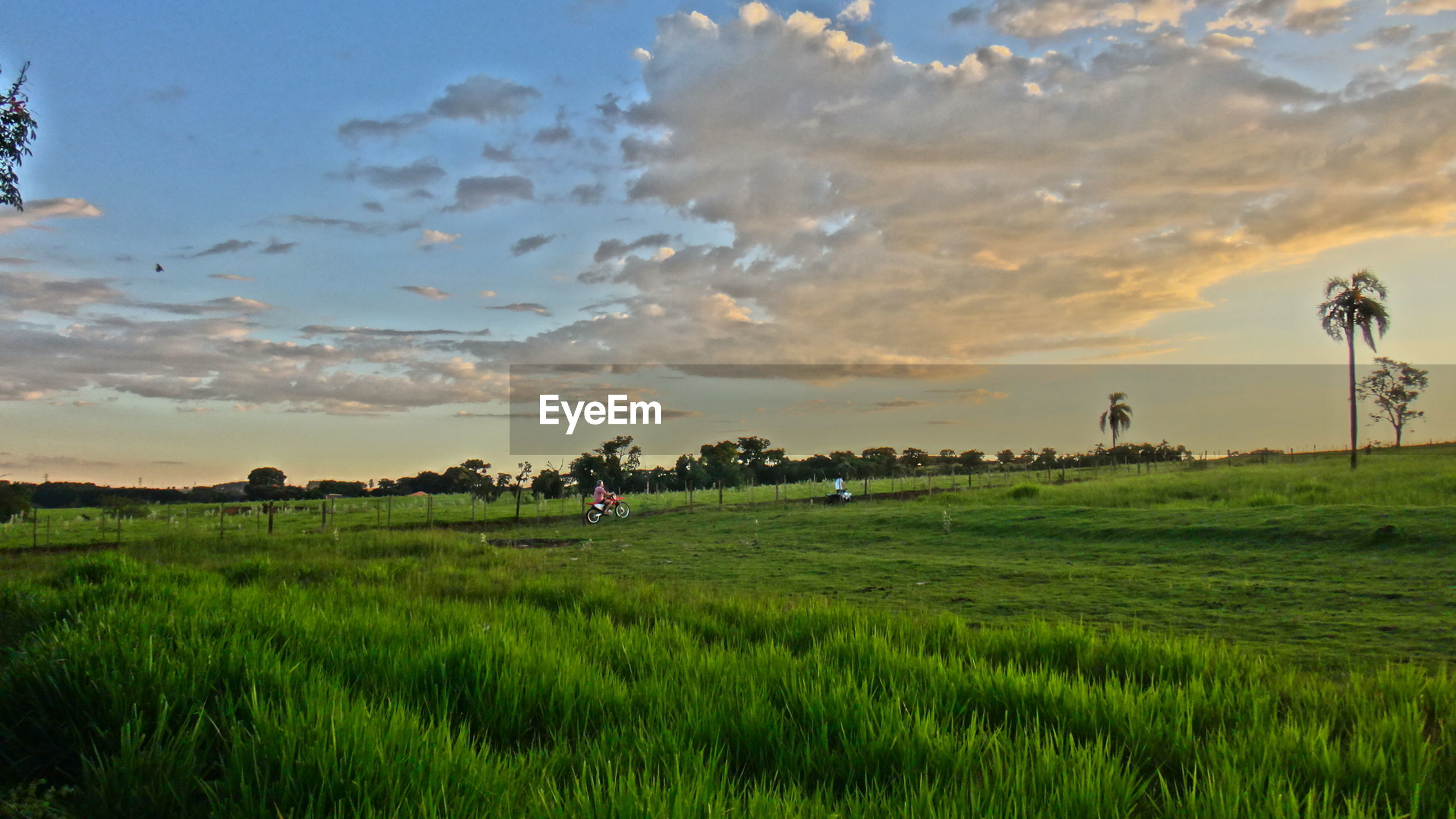 Scenic view of grassy landscape against sky during sunset