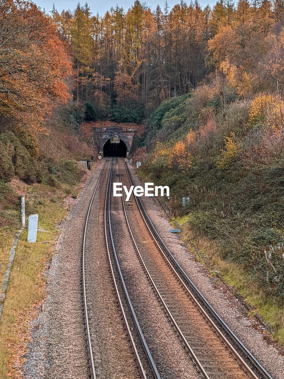 HIGH ANGLE VIEW OF RAILROAD TRACKS ALONG TREES