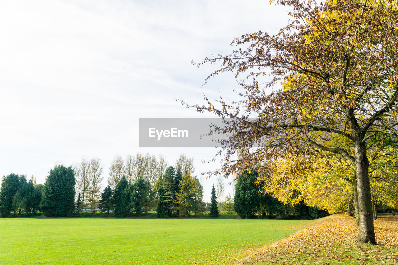tree, grass, beauty in nature, nature, growth, tranquility, autumn, scenics, tranquil scene, landscape, sky, field, no people, scenery, green color, branch, outdoors, day