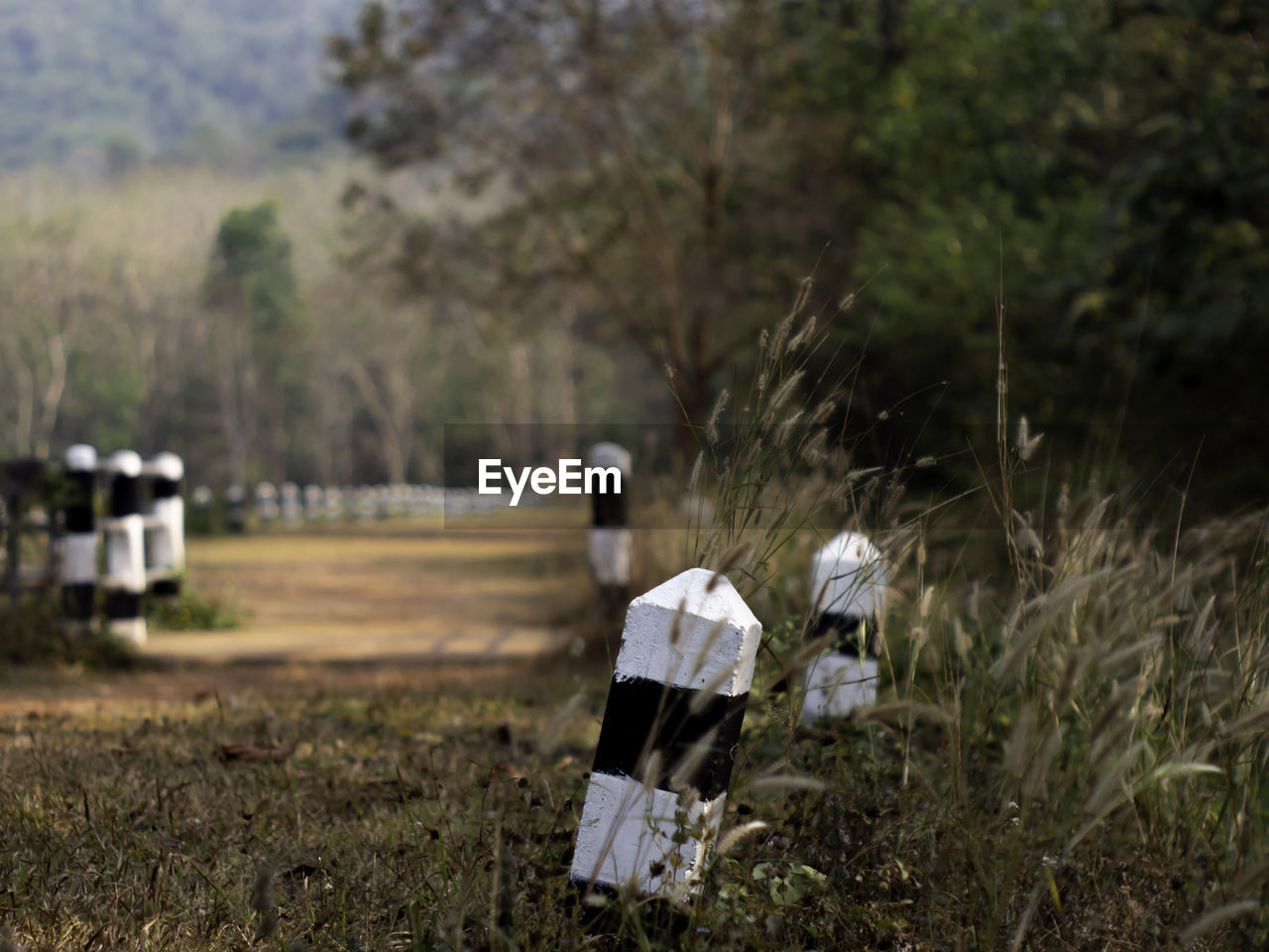 plant, land, field, nature, tree, day, grass, focus on foreground, no people, outdoors, environment, growth, military, landscape, white color, grave, cemetery, selective focus, in a row