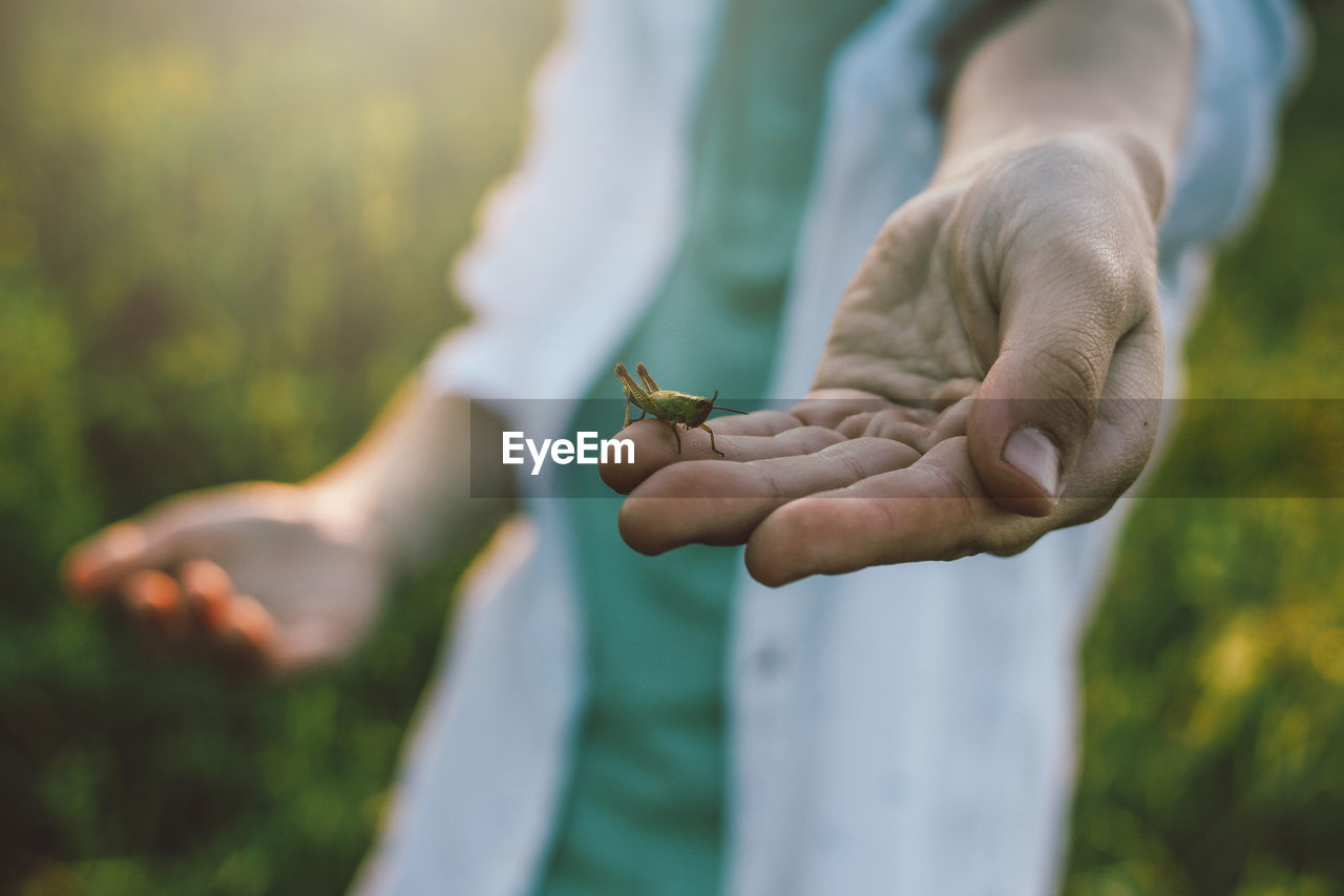human hand, hand, focus on foreground, holding, day, human body part, real people, one person, nature, plant, selective focus, close-up, outdoors, growth, men, lifestyles, animal wildlife, beauty in nature, leisure activity, finger