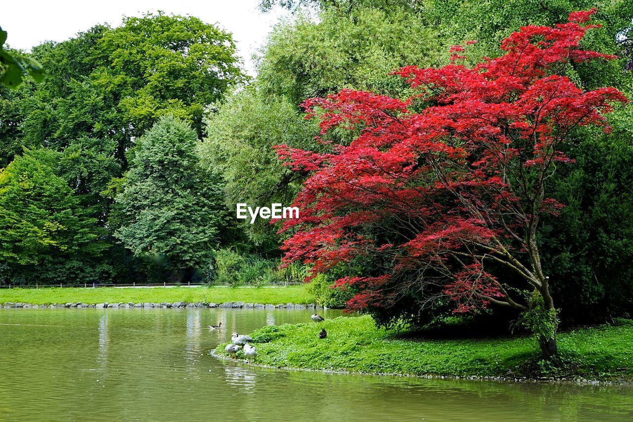 SCENIC VIEW OF TREES BY LAKE