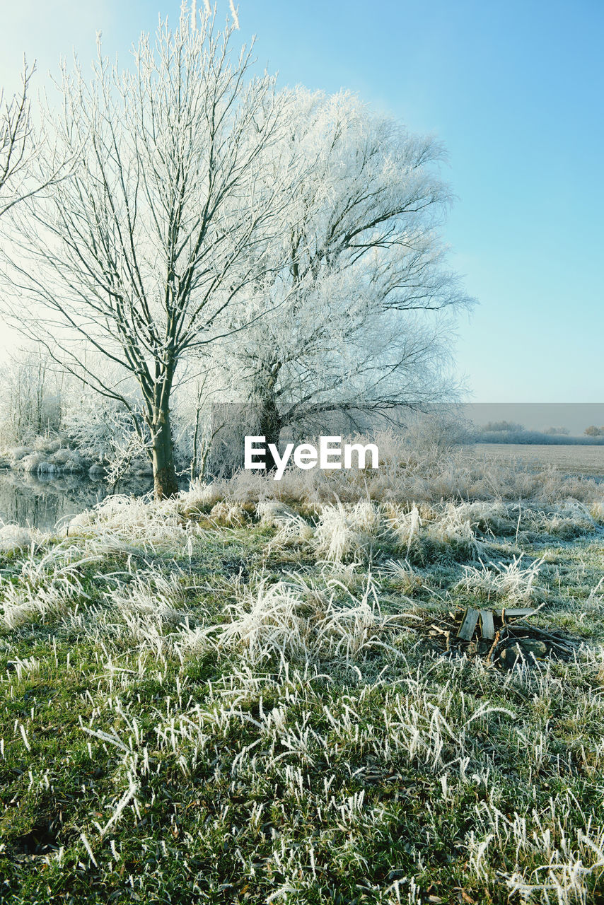 nature, grass, tranquility, landscape, day, no people, tranquil scene, field, beauty in nature, outdoors, bare tree, plant, growth, clear sky, tree, scenics, winter, sky
