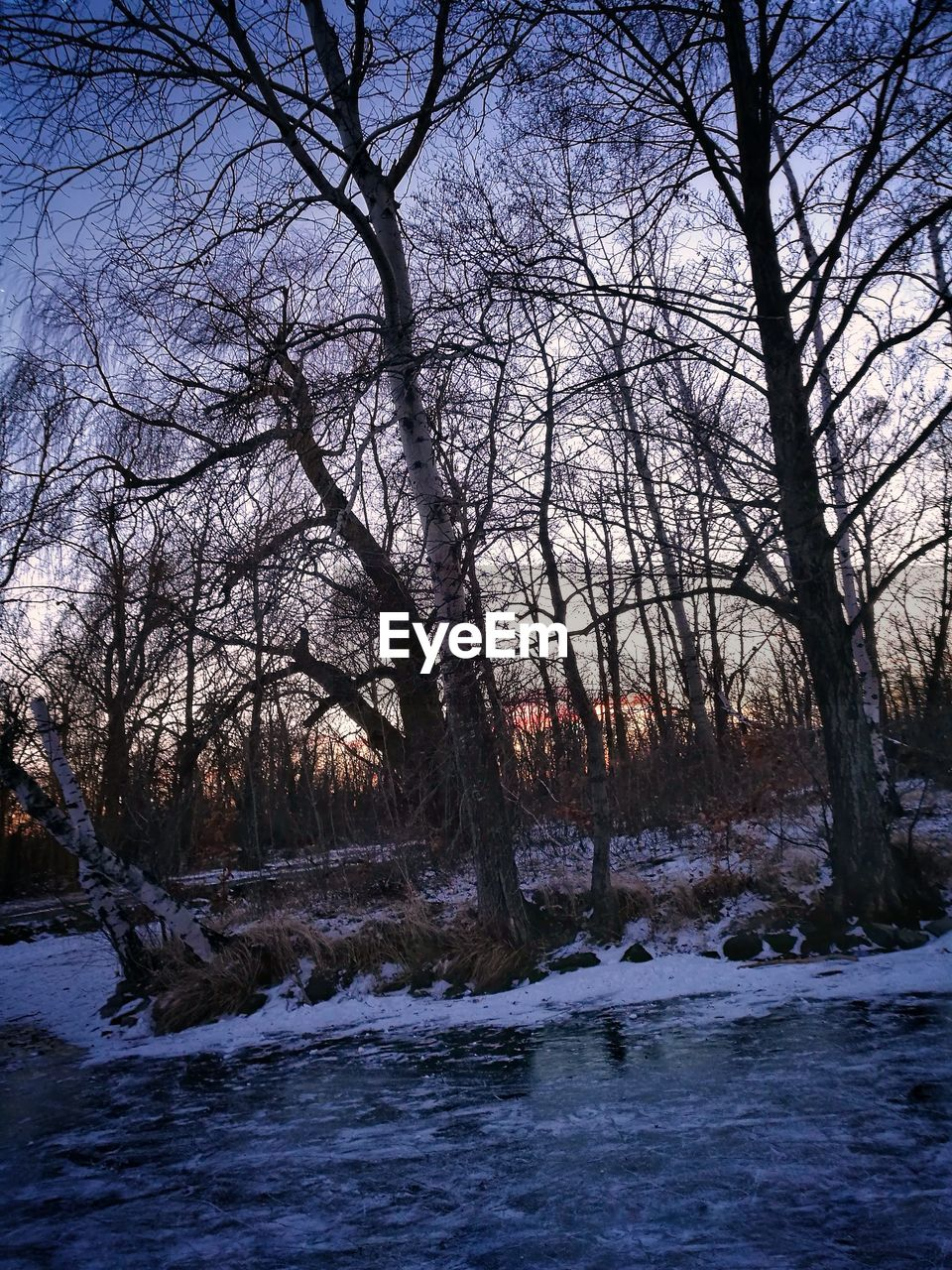 bare tree, tree, winter, river, cold temperature, nature, tranquility, water, beauty in nature, no people, outdoors, snow, tranquil scene, branch, waterfront, scenics, day, landscape, forest, sky, waterfall, clear sky