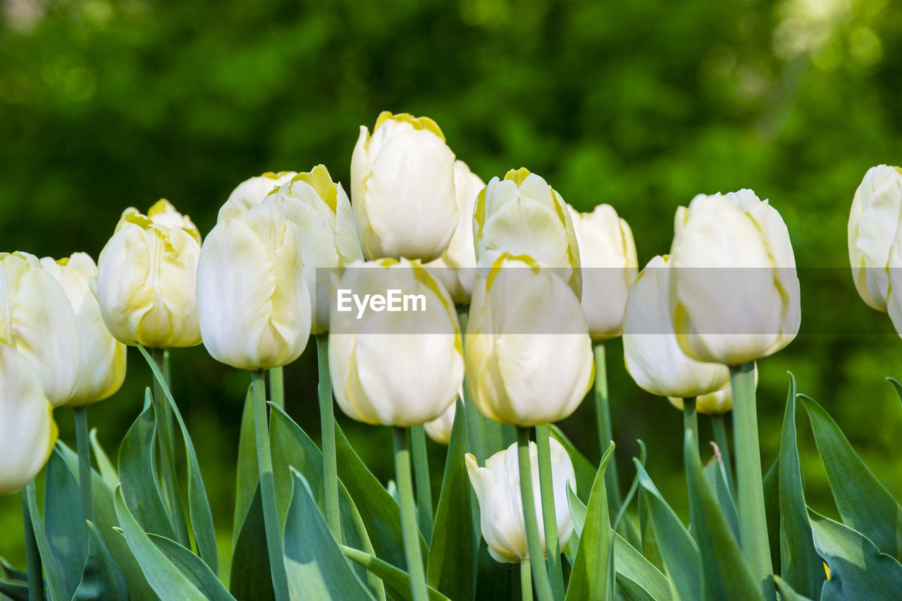 plant, flower, beauty in nature, flowering plant, fragility, vulnerability, growth, close-up, petal, freshness, nature, green color, flower head, day, field, inflorescence, white color, no people, land, outdoors
