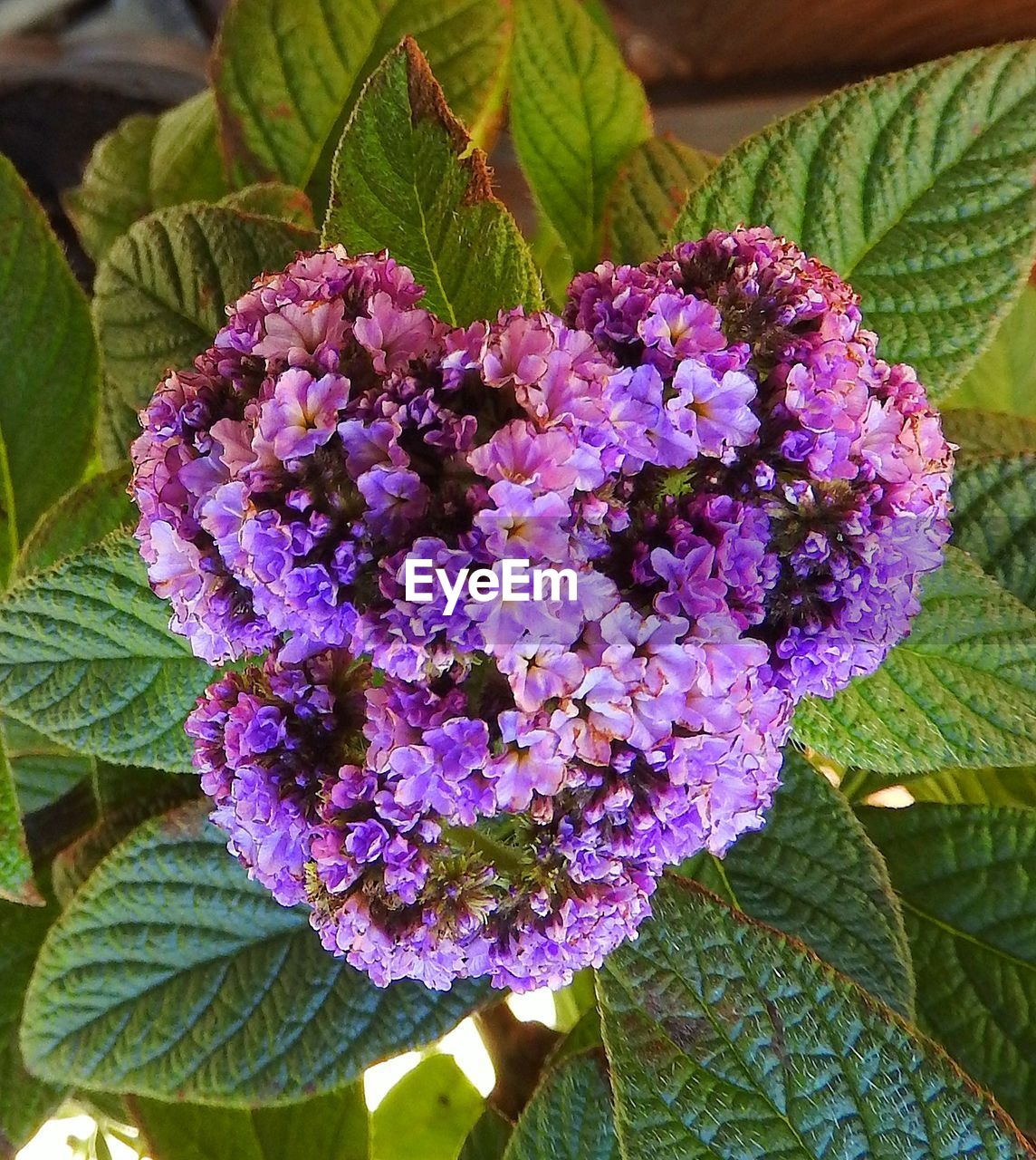 purple, growth, flower, leaf, freshness, fragility, plant, beauty in nature, nature, day, petal, close-up, outdoors, no people, green color, lilac, flower head, blooming