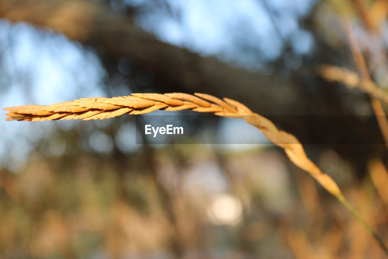 close-up, focus on foreground, rope, no people, strength, day, selective focus, nature, pattern, twisted, textured, metal, plant, outdoors, growth, beauty in nature, brown, sunlight, connection, safety, tangled