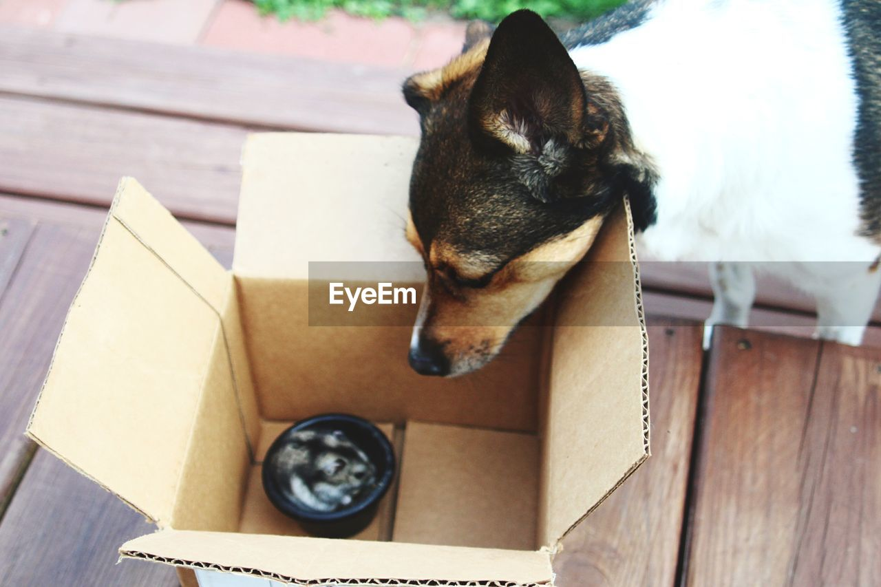 one animal, pets, animal themes, domestic, animal, domestic animals, mammal, canine, dog, vertebrate, no people, wood - material, indoors, focus on foreground, box, high angle view, container, close-up, relaxation, cardboard
