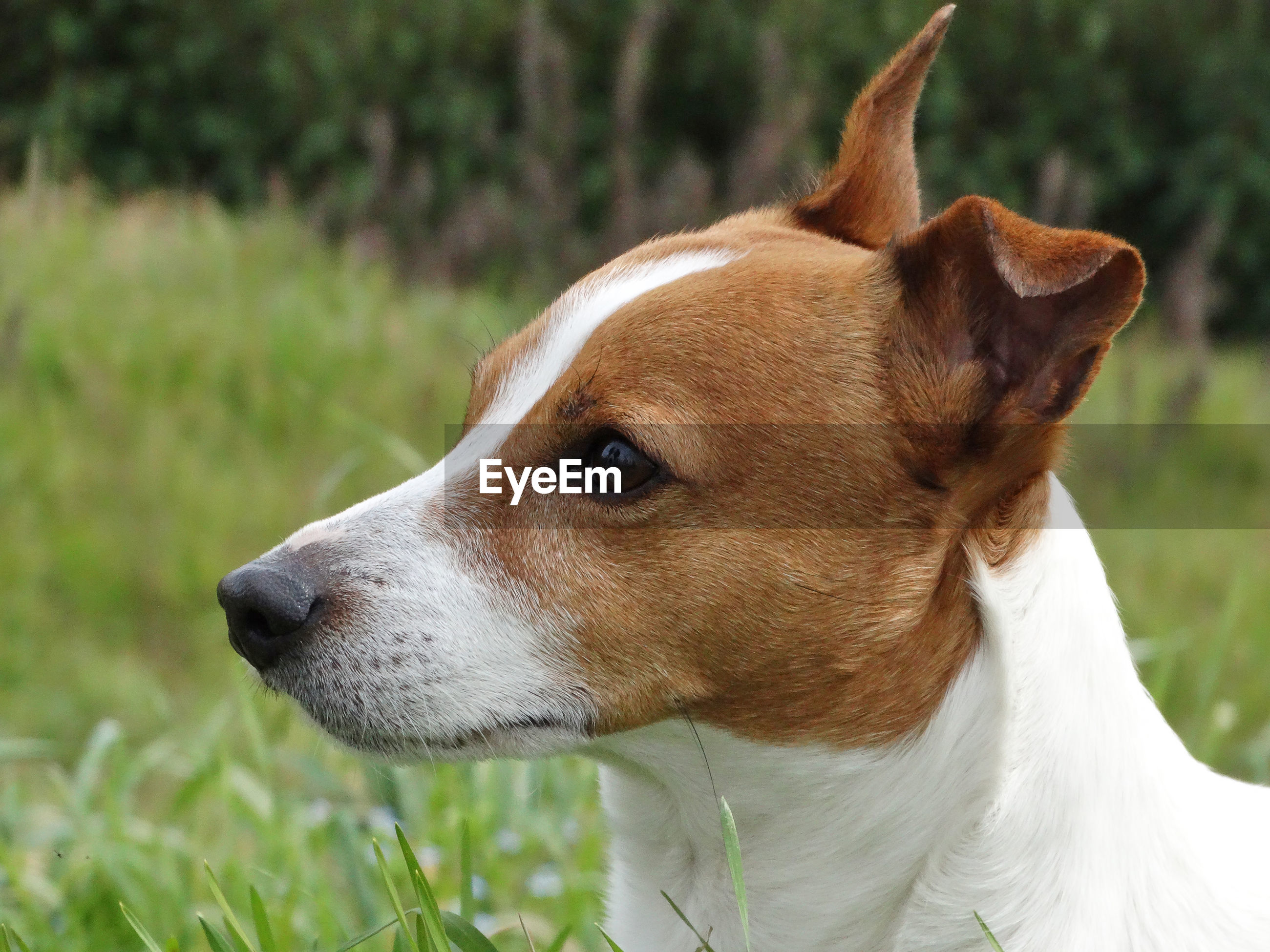 CLOSE-UP OF BROWN DOG