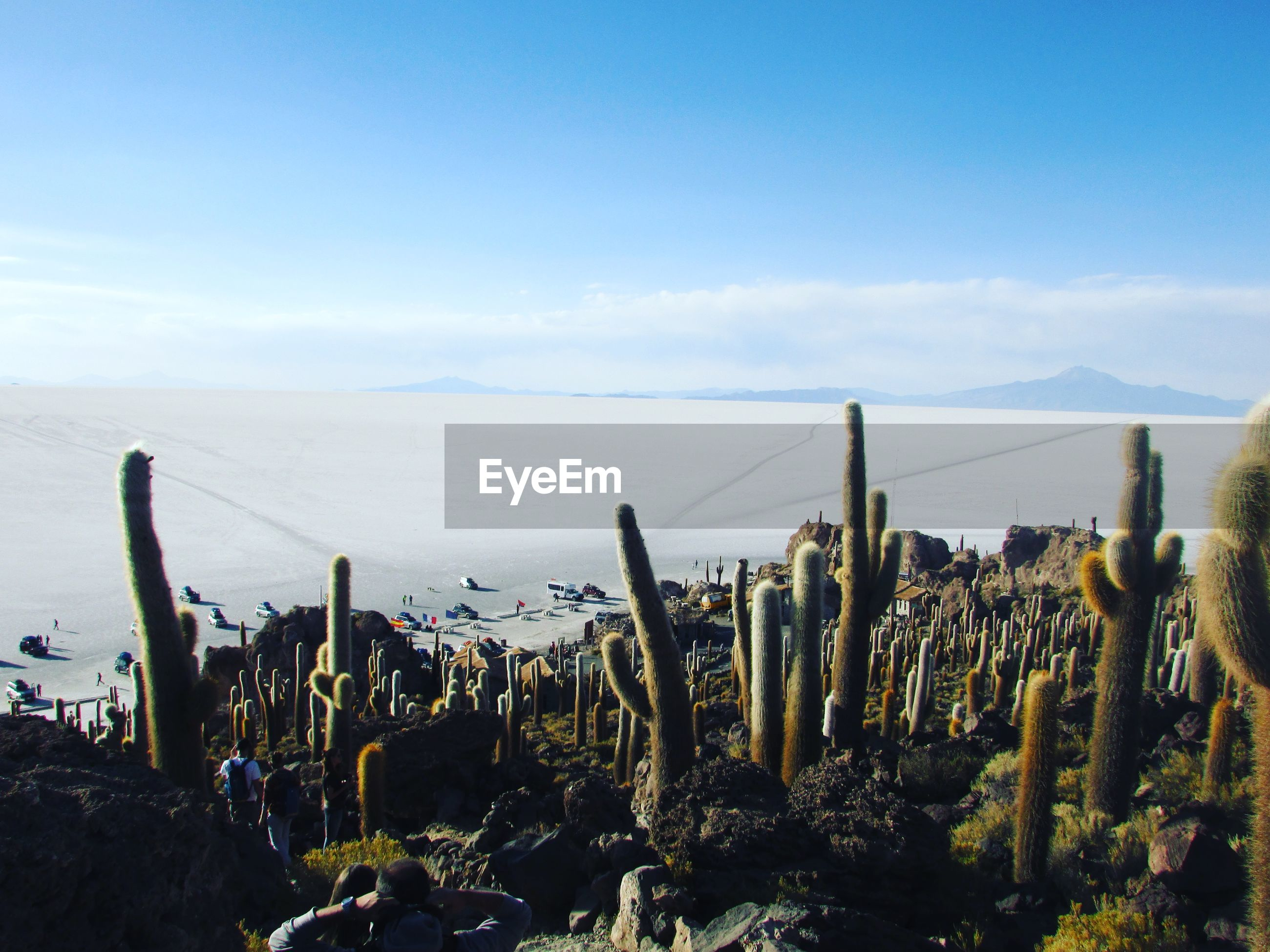 plant, cactus, water, sky, growth, sea, tranquility, close-up, tranquil scene, nature, travel destinations, wooden post, scenics, shore, beauty in nature, non-urban scene, thorn, cloud - sky, outdoors, tourism, spiked, focus on foreground, uncultivated, green color, mountain