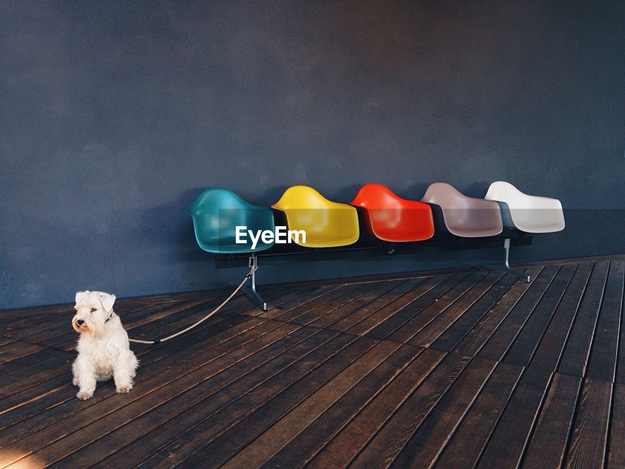 Dog tied with empty colorful seats at museum