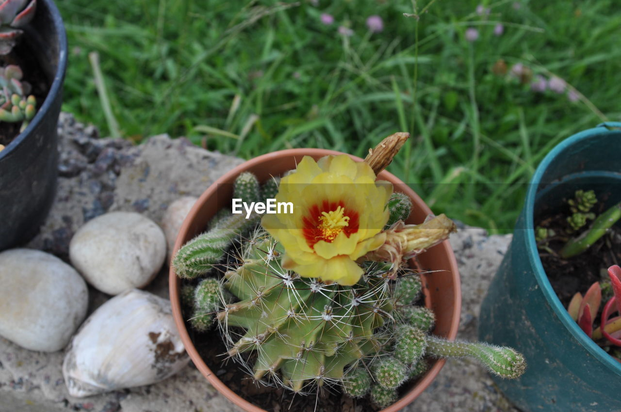 plant, growth, flower, freshness, flowering plant, nature, day, potted plant, fragility, high angle view, vulnerability, close-up, succulent plant, beauty in nature, no people, green color, cactus, outdoors, inflorescence, petal, flower head, flower pot, gardening