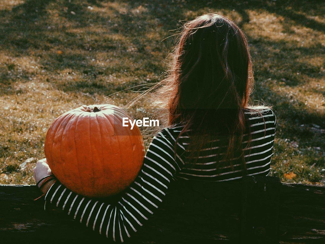 Rear View Of Woman With Pumpkin Sitting On Field During Autumn