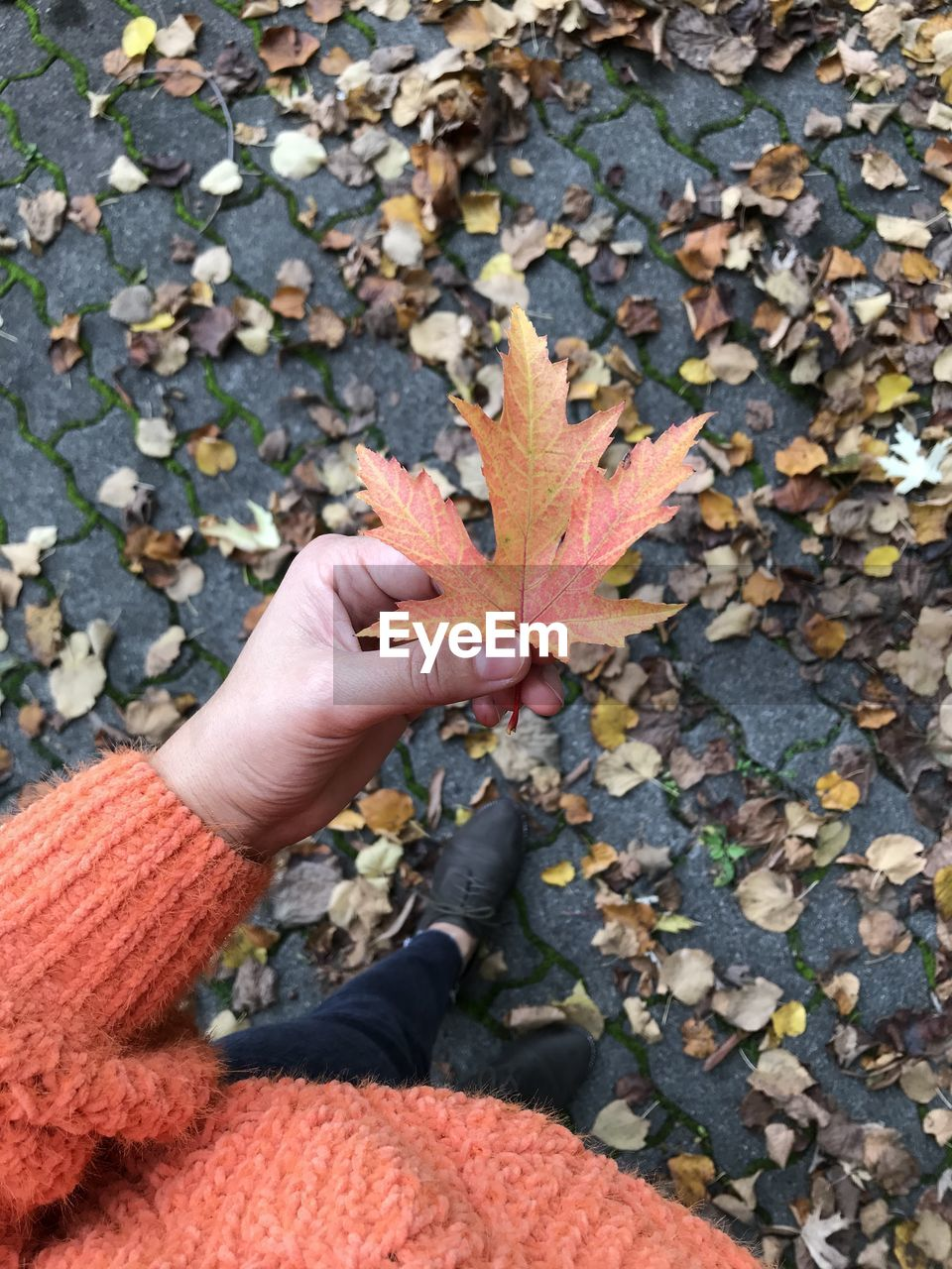autumn, one person, plant part, human hand, leaf, change, hand, human body part, personal perspective, real people, body part, unrecognizable person, orange color, day, holding, nature, maple leaf, lifestyles, high angle view, leisure activity, finger, outdoors, leaves, autumn collection, human limb, natural condition