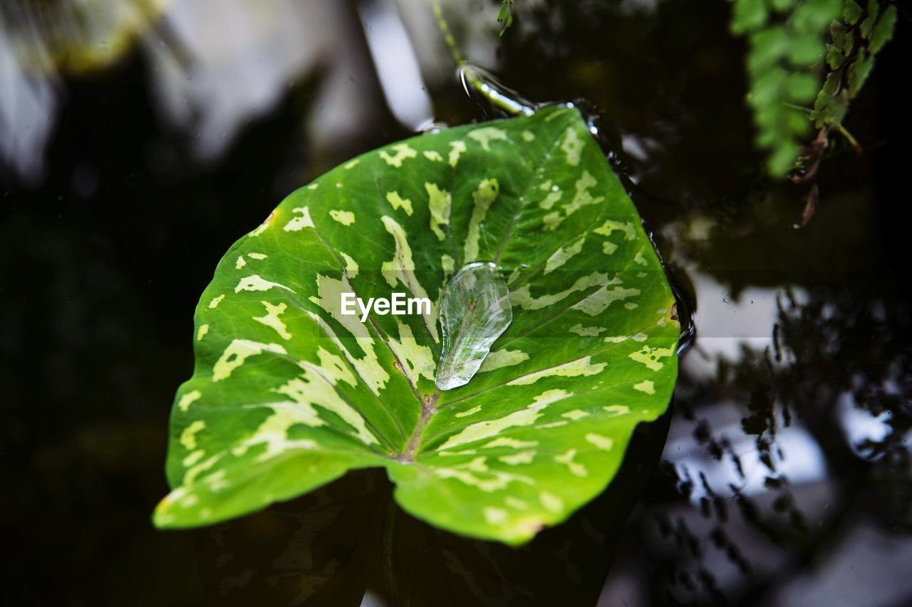green color, leaf, plant part, water, growth, plant, close-up, wet, nature, drop, beauty in nature, no people, day, focus on foreground, freshness, high angle view, outdoors, selective focus, raindrop, rain, leaves, dew, purity