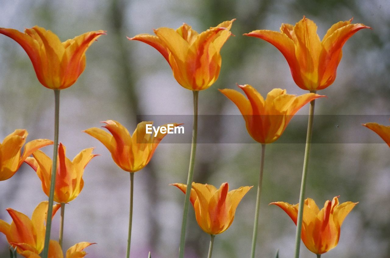 flower, petal, growth, plant, nature, freshness, beauty in nature, fragility, yellow, blooming, no people, flower head, outdoors, day, close-up, day lily
