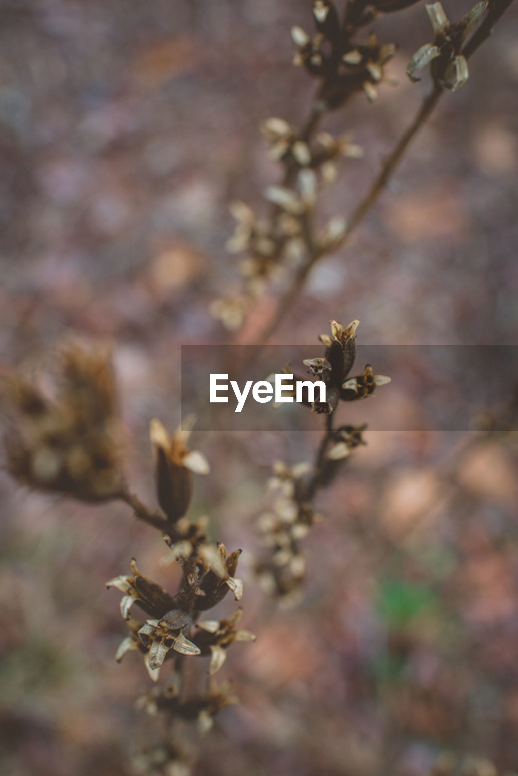 flower, growth, focus on foreground, plant, fragility, close-up, nature, freshness, selective focus, branch, beauty in nature, stem, twig, outdoors, day, no people, growing, petal, tree, bud