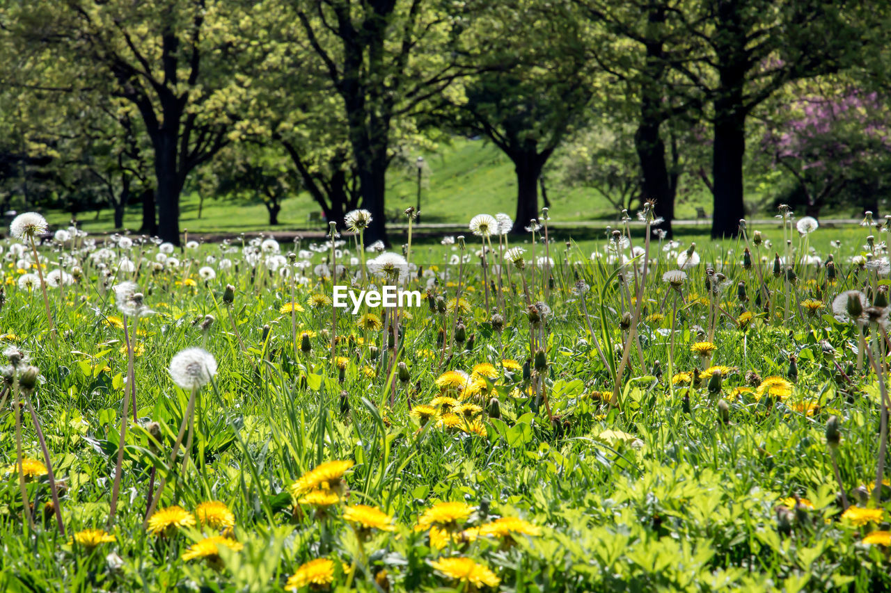plant, flower, flowering plant, growth, tree, freshness, beauty in nature, land, field, nature, vulnerability, fragility, grass, day, green color, no people, tranquility, park, park - man made space, yellow, outdoors, springtime, flower head, flowerbed