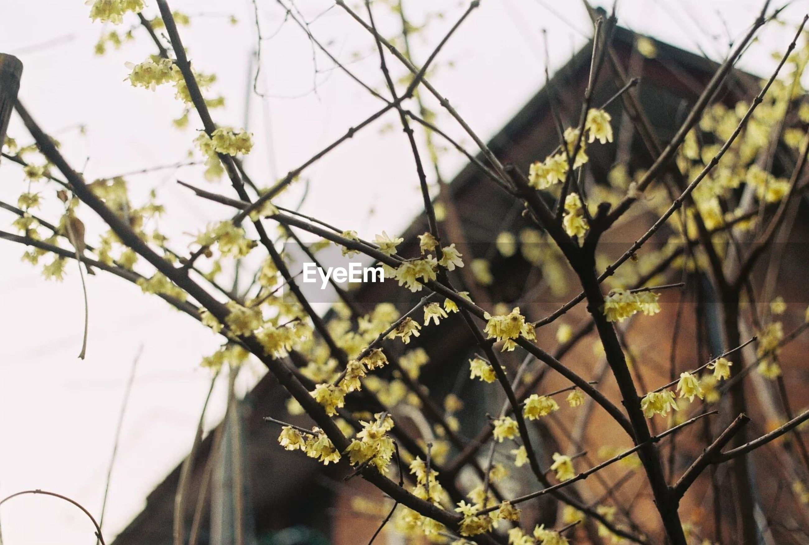 flower, growth, fragility, low angle view, freshness, plant, close-up, architecture, nature, focus on foreground, sky, beauty in nature, day, branch, outdoors, petal, no people, growing, springtime, in bloom, flower head, blooming