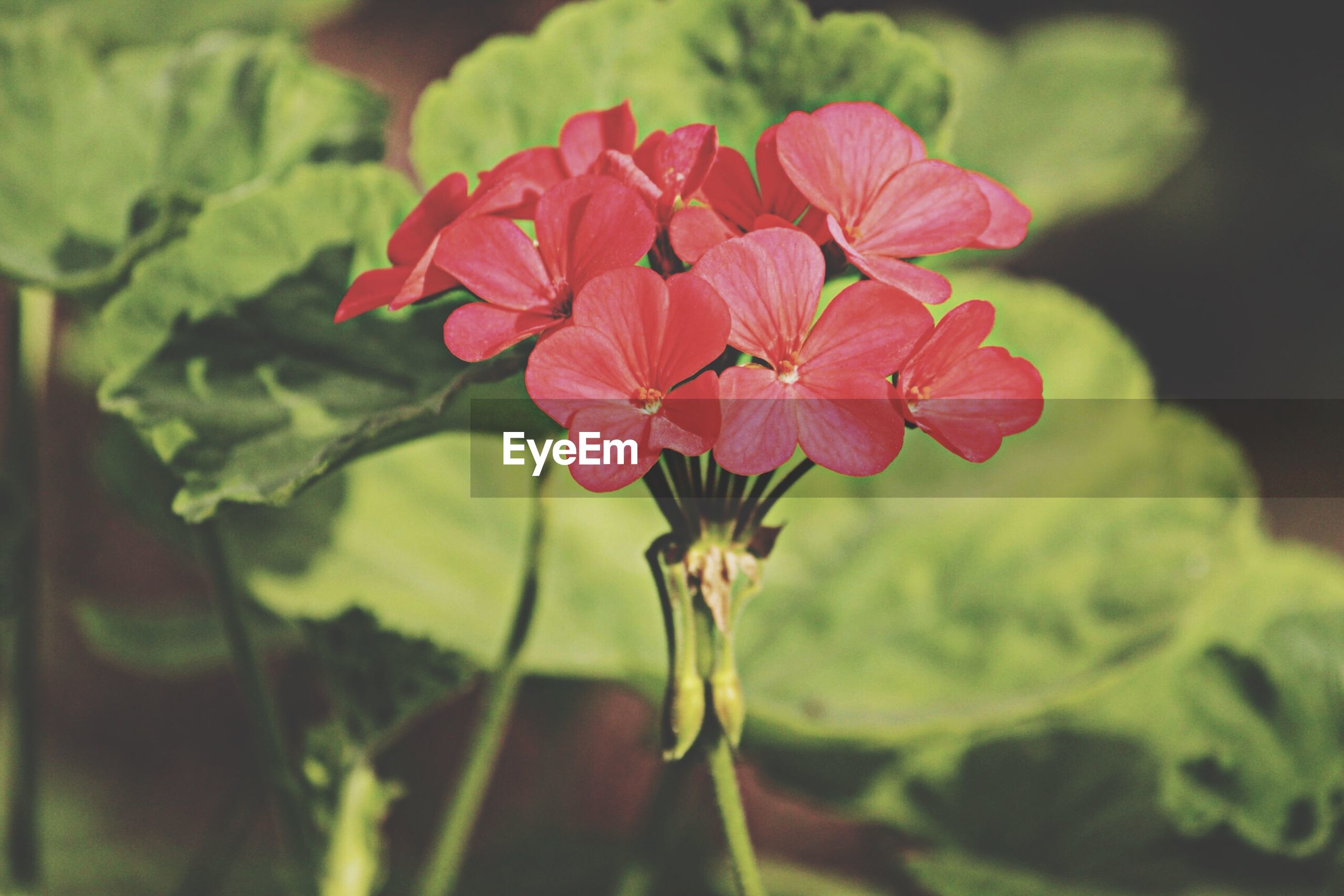 flower, freshness, focus on foreground, fragility, growth, petal, close-up, beauty in nature, plant, flower head, nature, red, blooming, leaf, selective focus, bud, stem, day, in bloom, outdoors