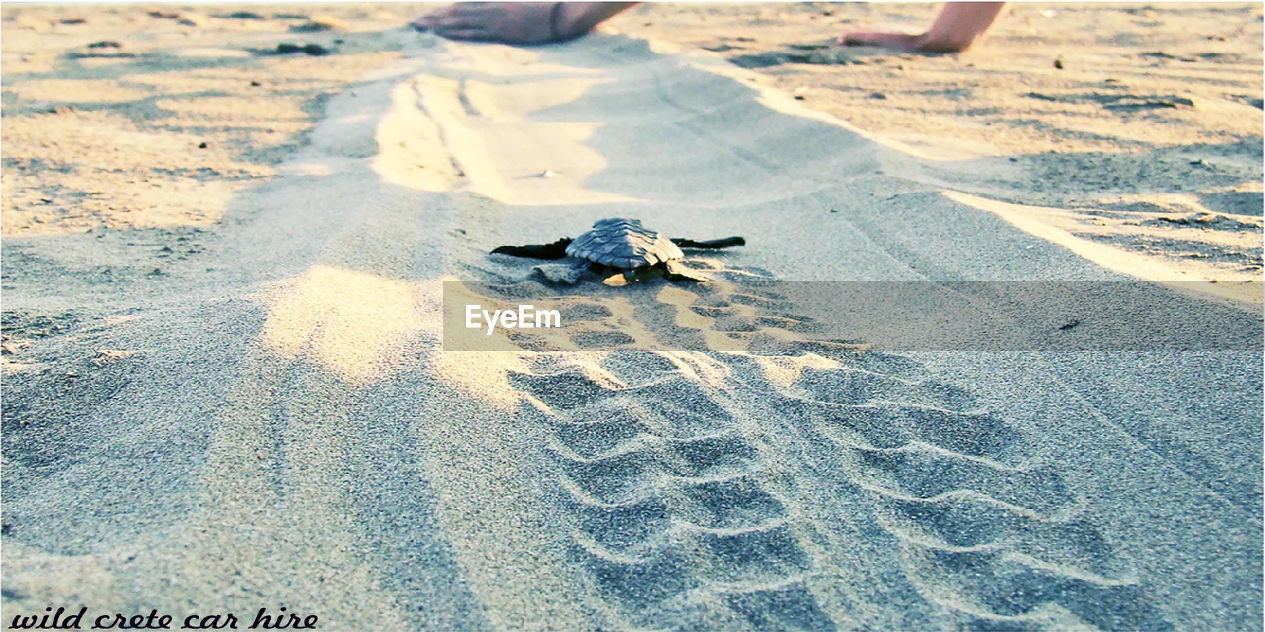 sand, animal themes, one animal, animals in the wild, high angle view, beach, day, animal wildlife, turtle, shadow, nature, no people, outdoors, sea turtle, sunlight, reptile, tortoise, mammal, tortoise shell