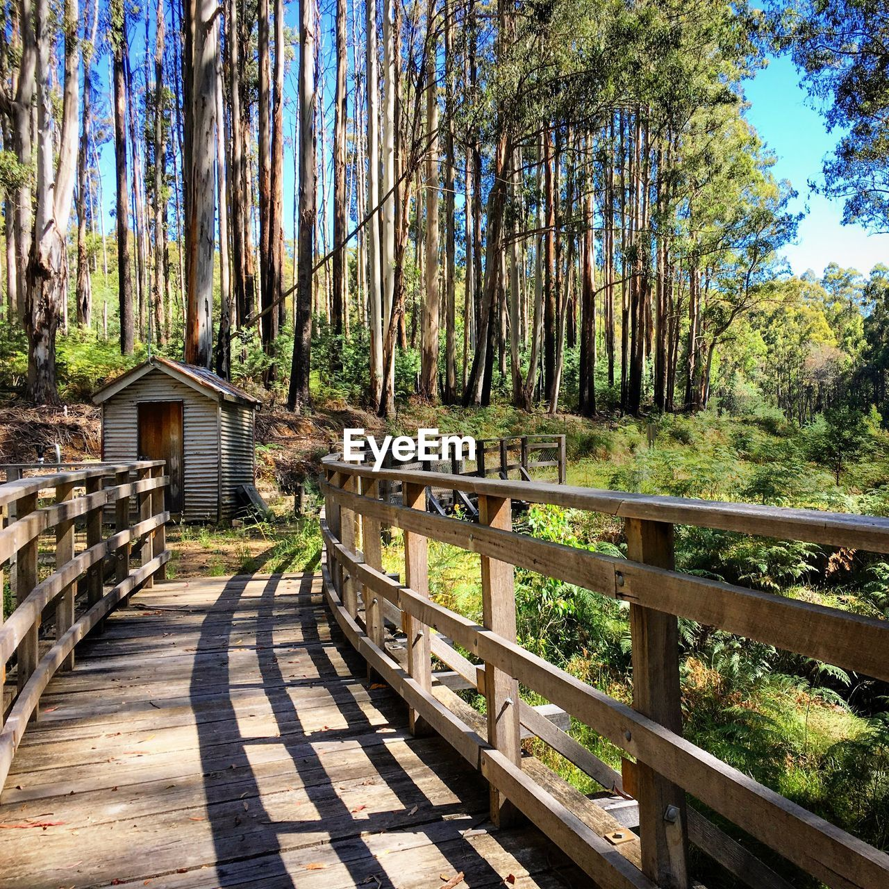 tree, plant, forest, nature, architecture, railing, land, tranquility, day, no people, built structure, wood - material, tranquil scene, sunlight, direction, the way forward, footpath, woodland, wood, shadow, outdoors, footbridge