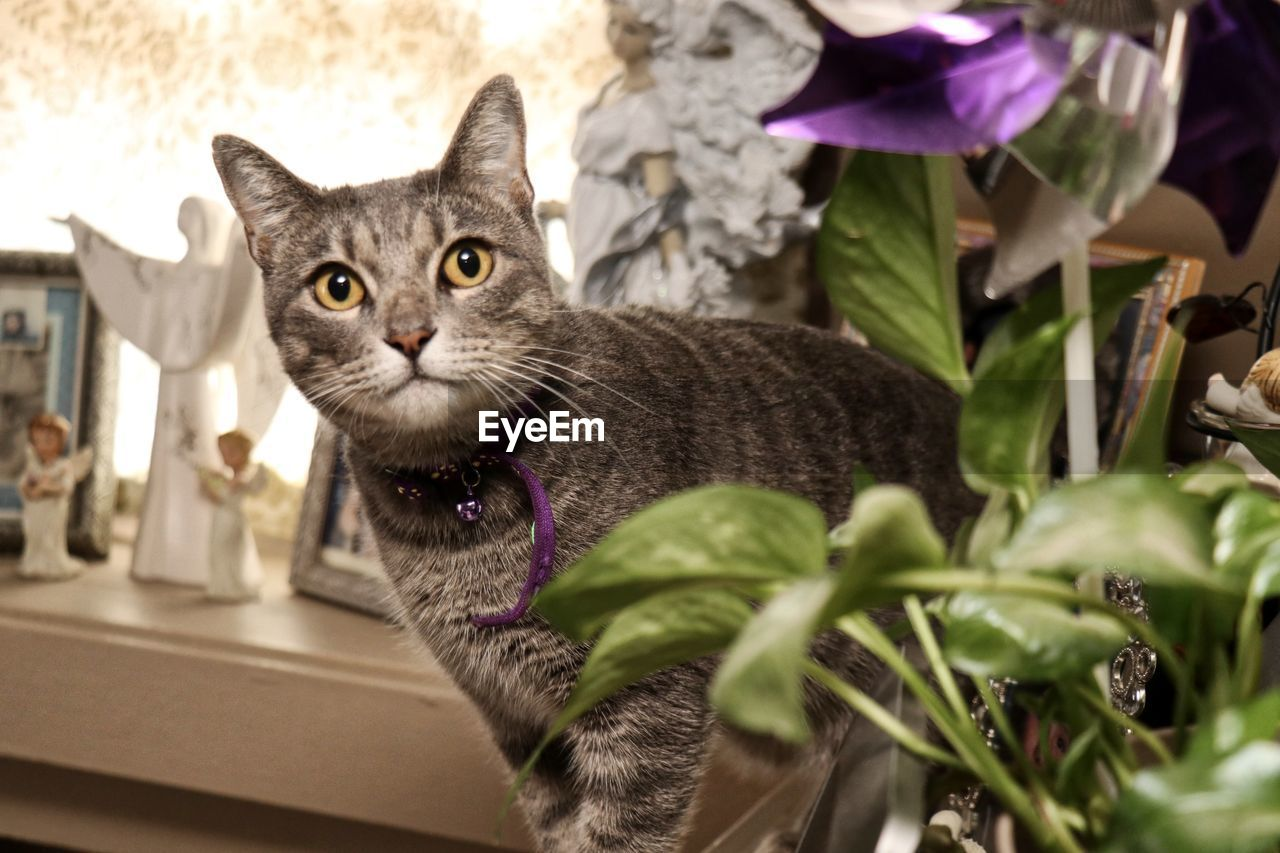 cat, domestic cat, pets, domestic, feline, domestic animals, animal themes, mammal, animal, one animal, vertebrate, leaf, portrait, plant part, looking at camera, whisker, no people, indoors, plant, sitting, animal head, yellow eyes, tabby