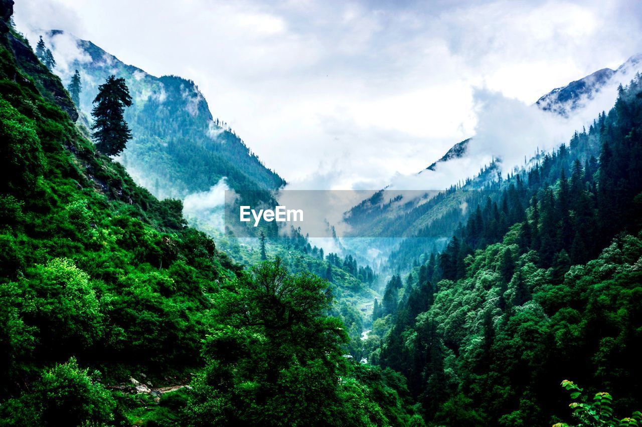 mountain, nature, beauty in nature, forest, outdoors, no people, landscape, wilderness, sky, day, tree, scenery, range
