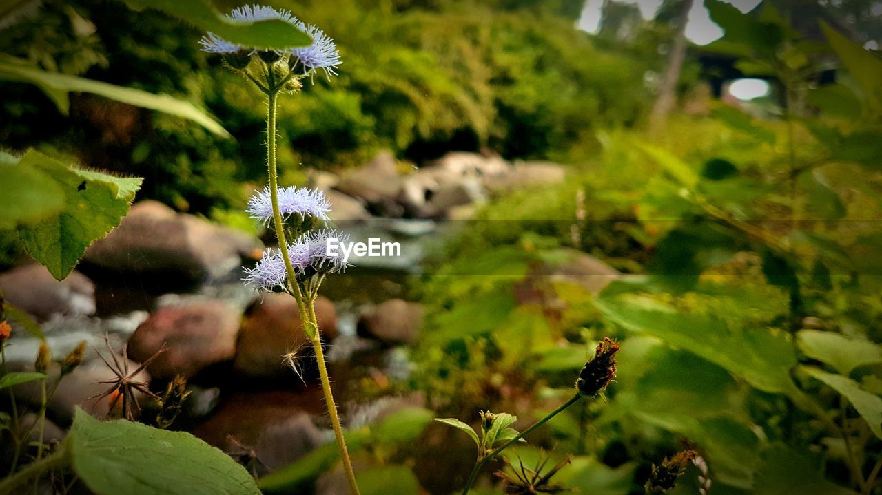 growth, flower, flowering plant, plant, beauty in nature, fragility, vulnerability, freshness, nature, selective focus, close-up, day, no people, flower head, petal, green color, plant part, leaf, inflorescence, focus on foreground, outdoors, purple, pollination