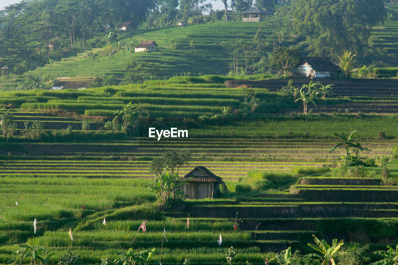 SCENIC VIEW OF FARM AGAINST HOUSES
