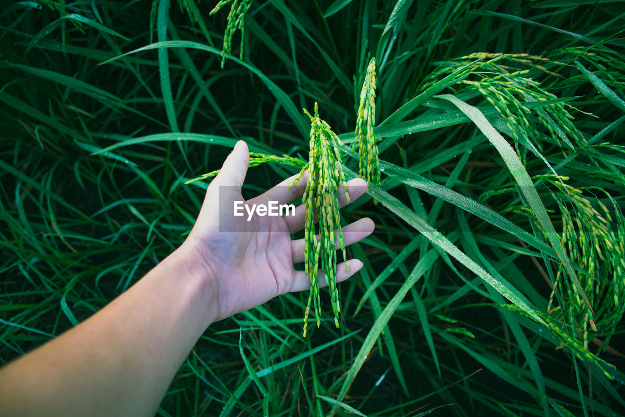Cropped Hand Of Woman Touching Plants On Field