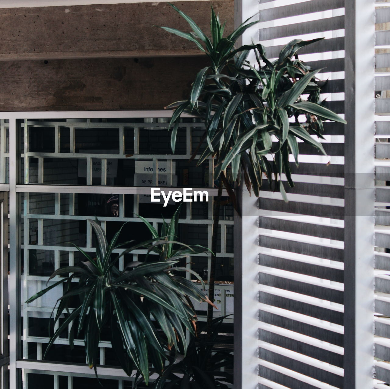 POTTED PLANT ON BUILDING