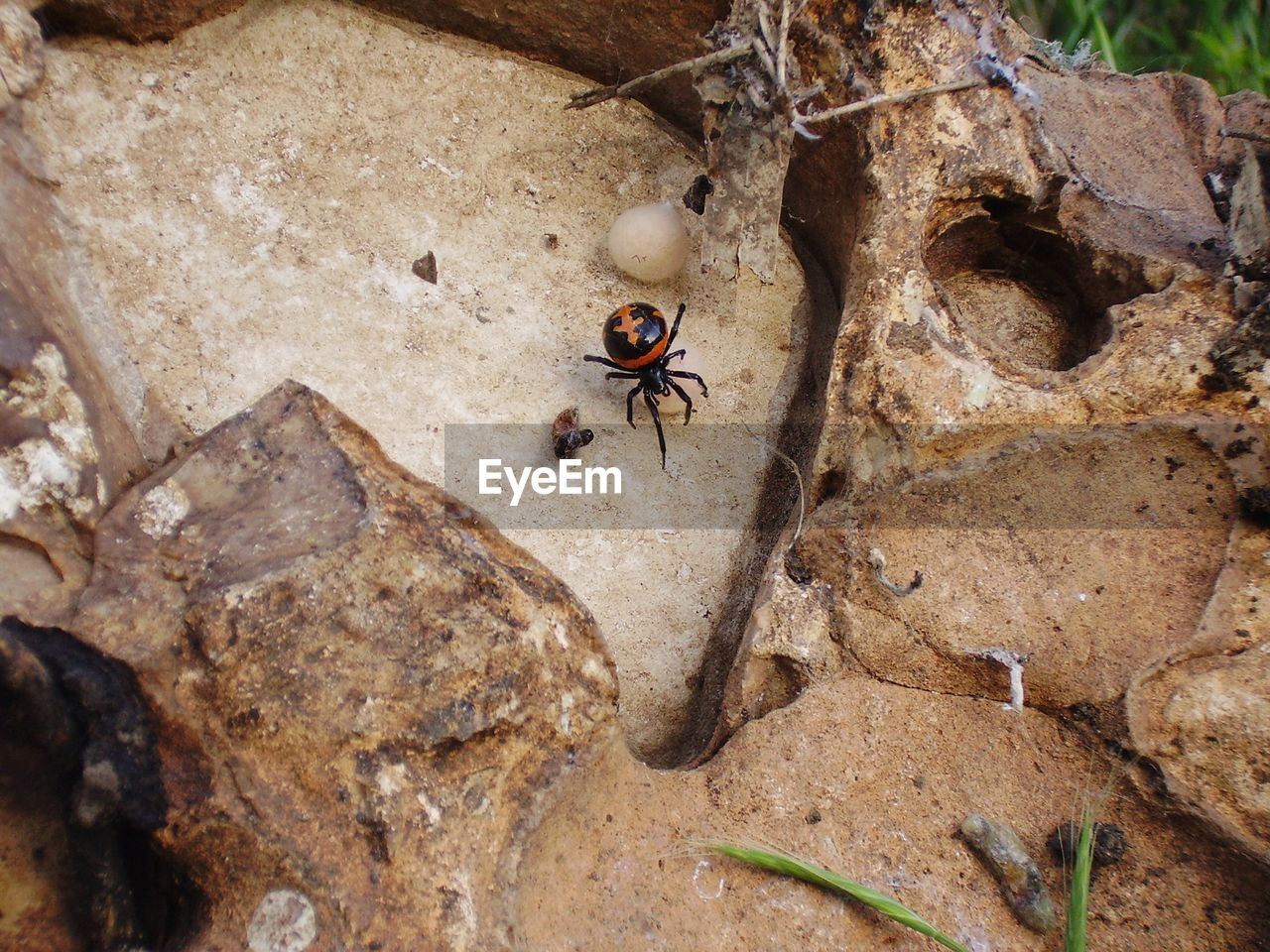 animal themes, animals in the wild, animal wildlife, insect, invertebrate, animal, one animal, rock, rock - object, solid, no people, high angle view, close-up, day, nature, beetle, zoology, outdoors, animal wing, ant