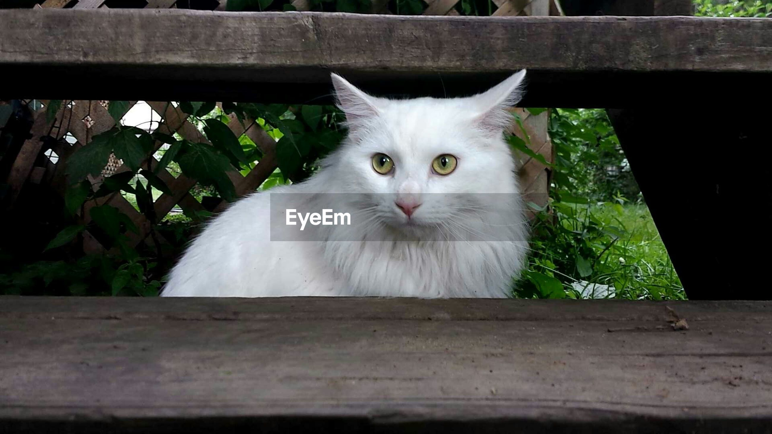 domestic cat, cat, pets, domestic animals, feline, animal themes, one animal, mammal, looking at camera, portrait, whisker, staring, sitting, alertness, close-up, front view, animal eye, animal head, plant, no people