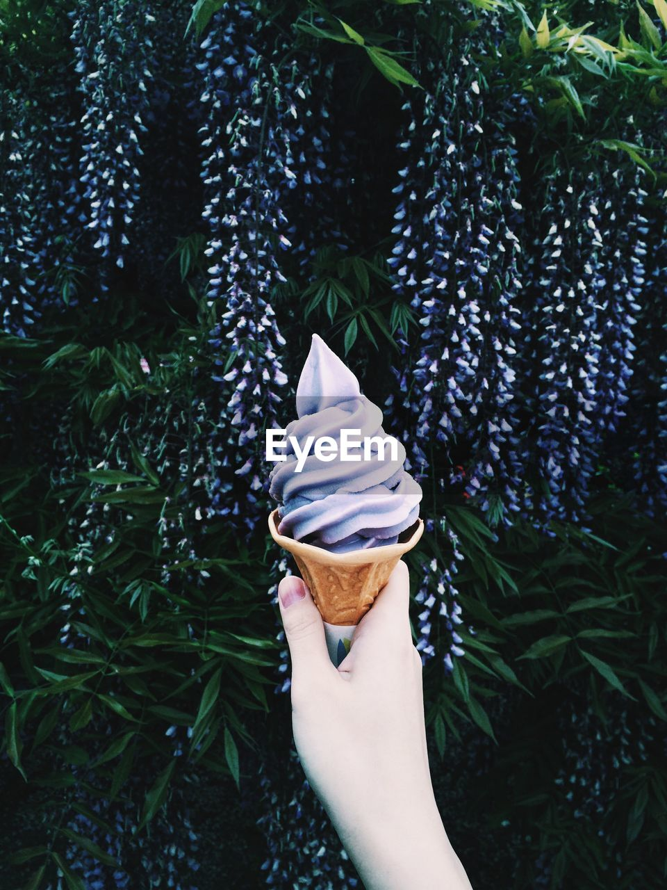 Cropped Image Of Hand Holding Purple Ice Cream Against Flowers