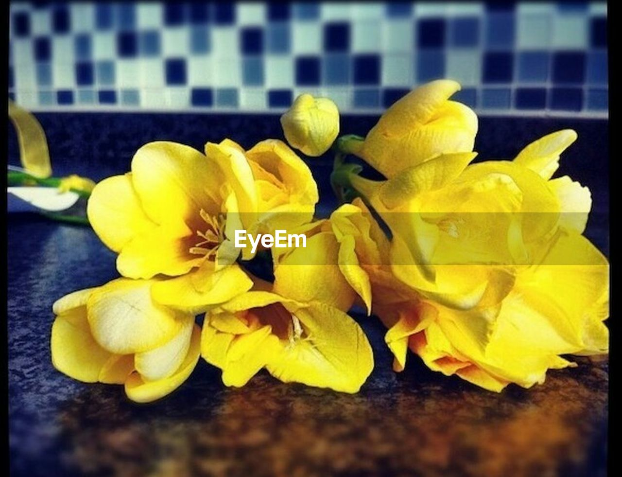 yellow, flower, petal, freshness, fragility, close-up, no people, flower head, indoors, beauty in nature, nature, day