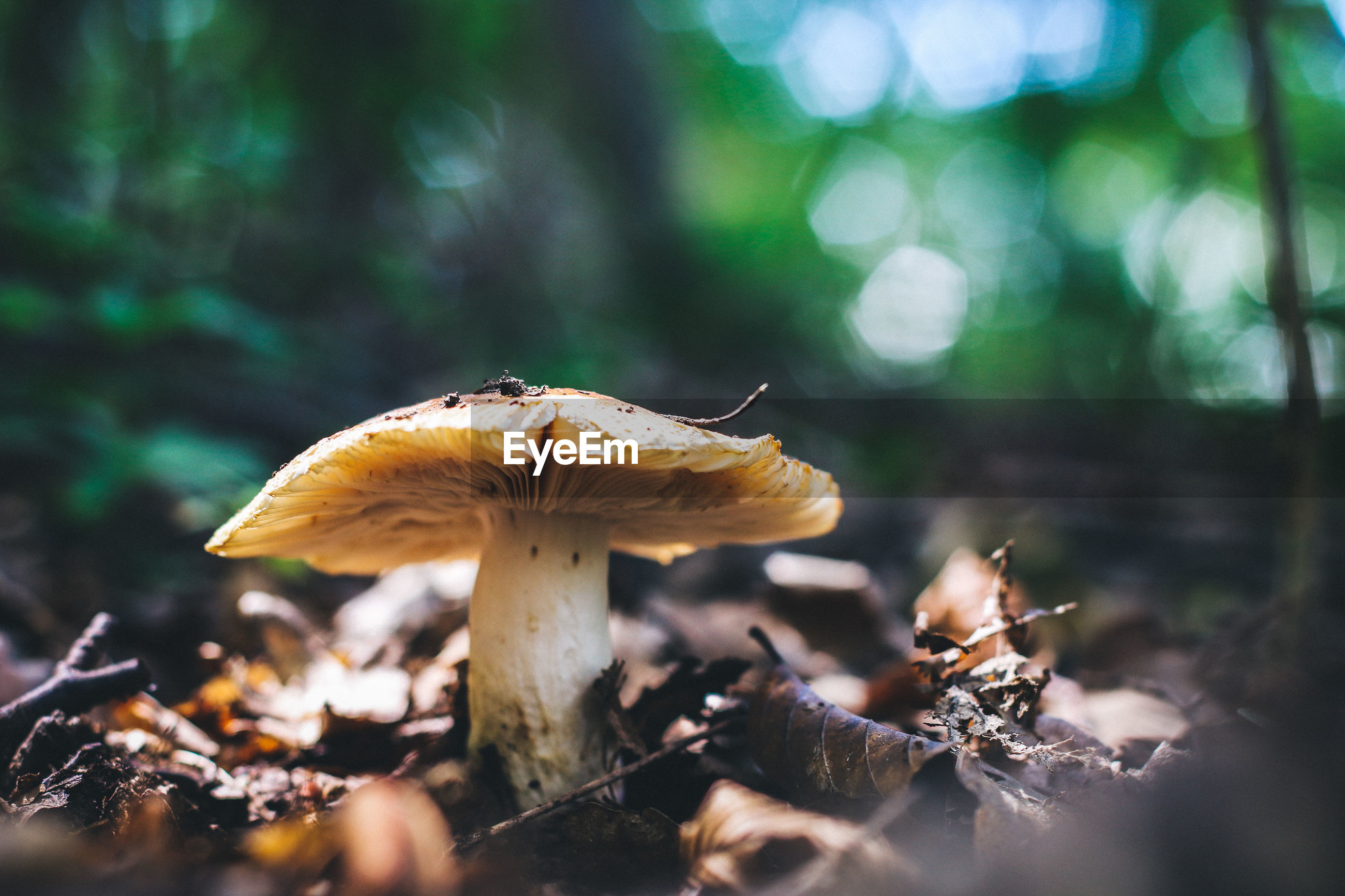 Surface level of mushroom against blurred background