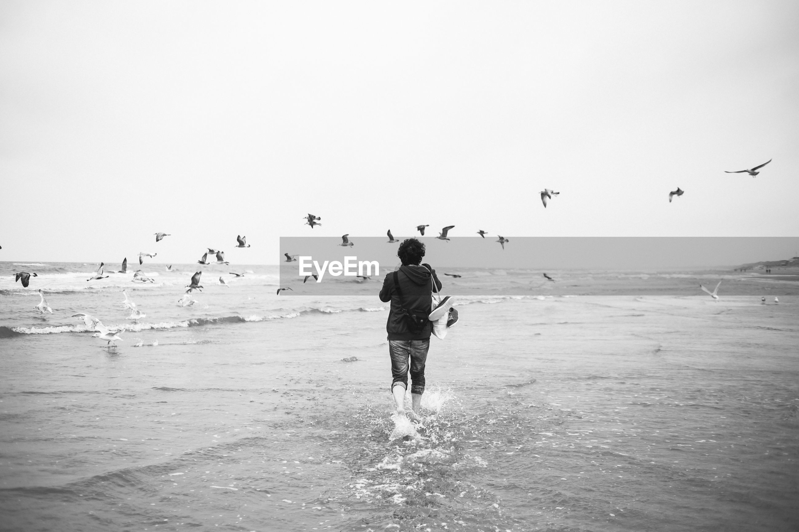 Rear view of man wading while seagulls flying over sea