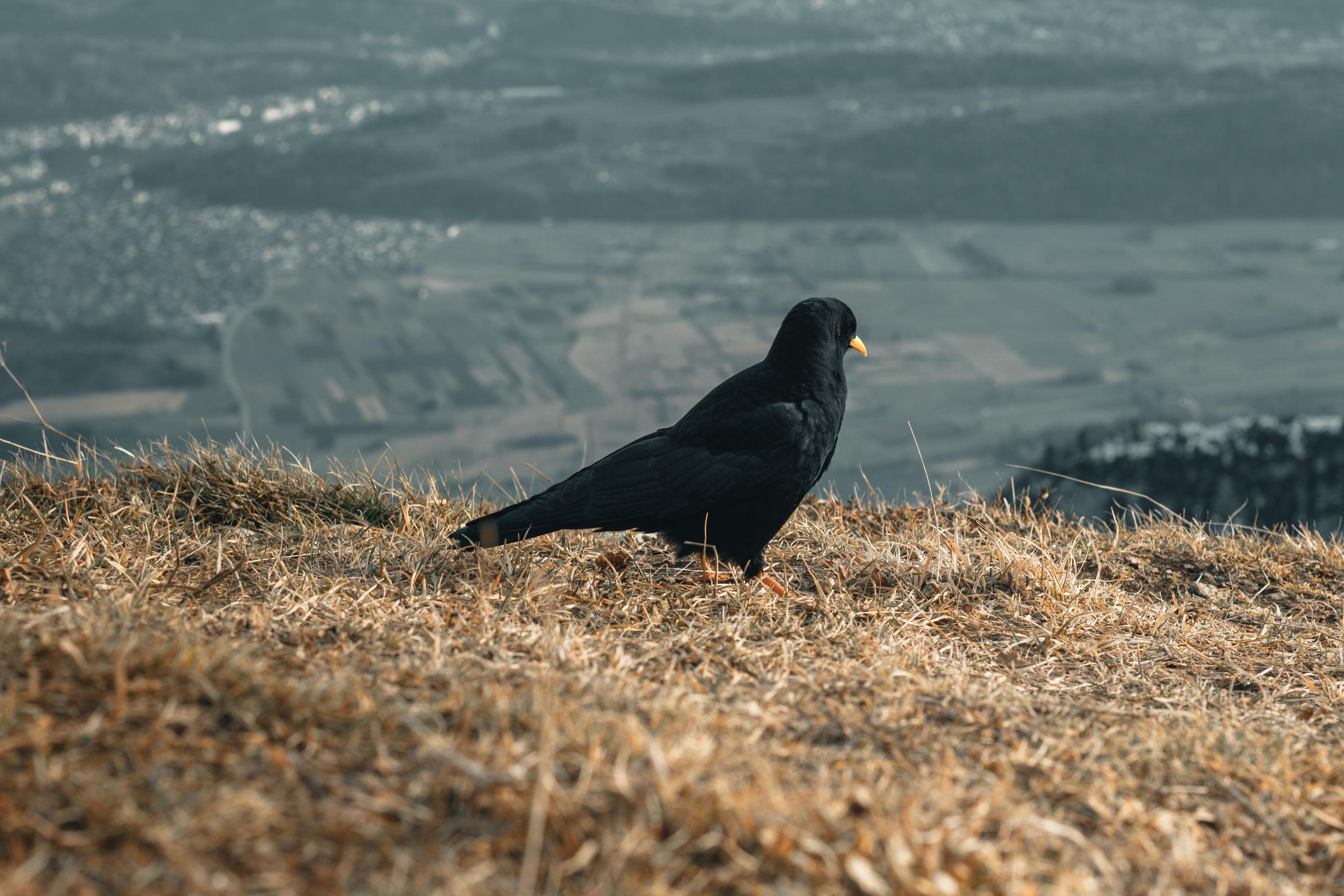 View of bird on field