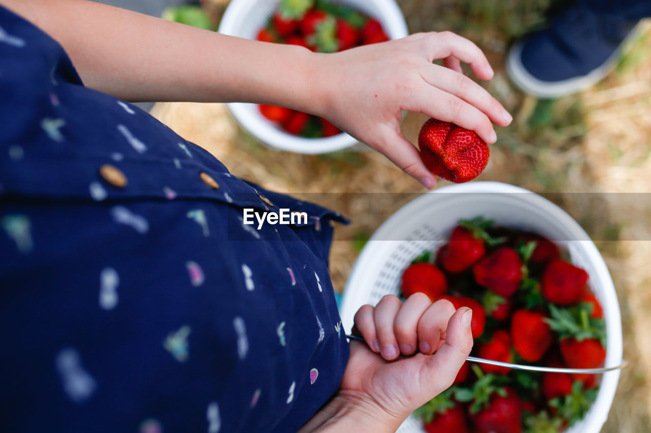 Midsection of boy holding strawberries in bucket while standing at farm