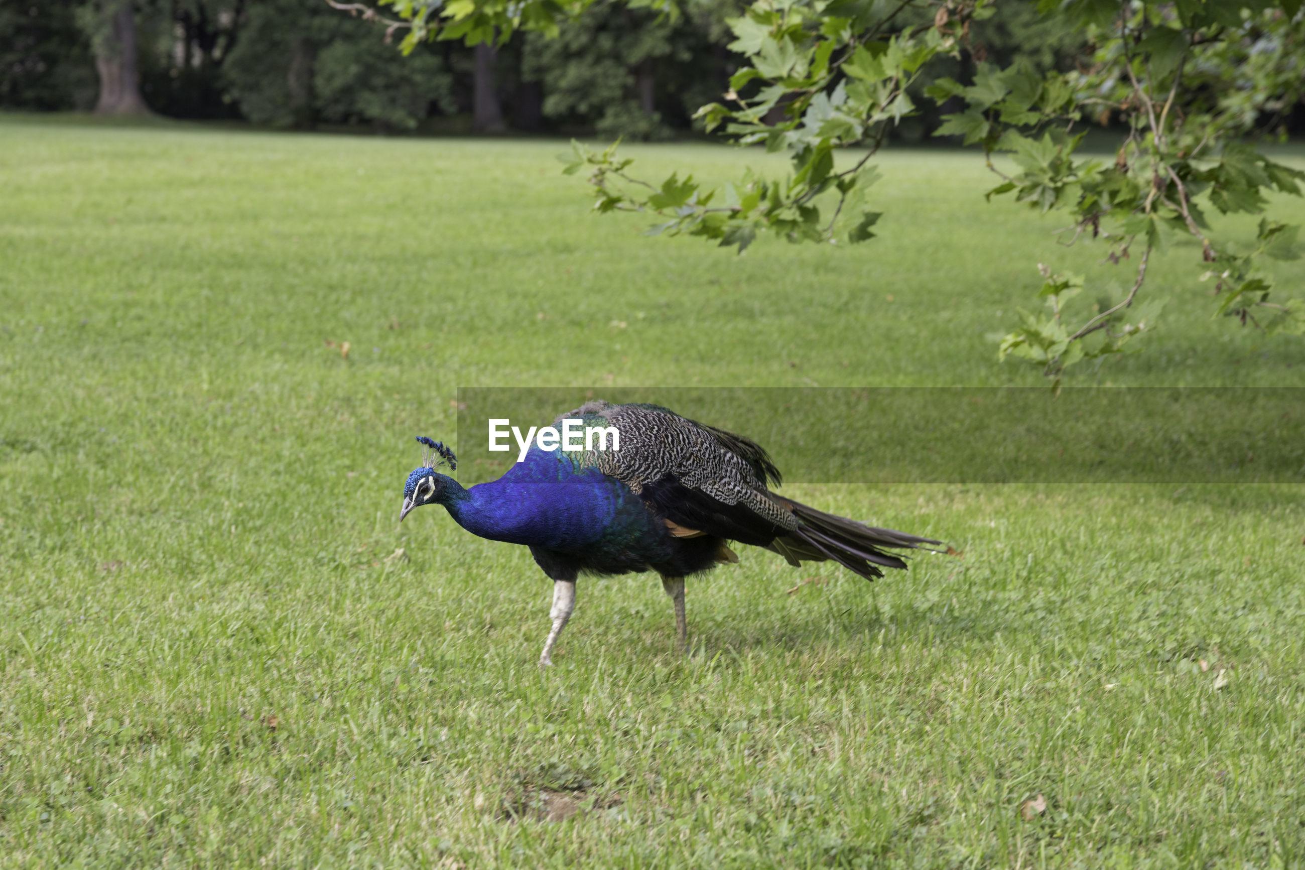 BIRD IN A FIELD