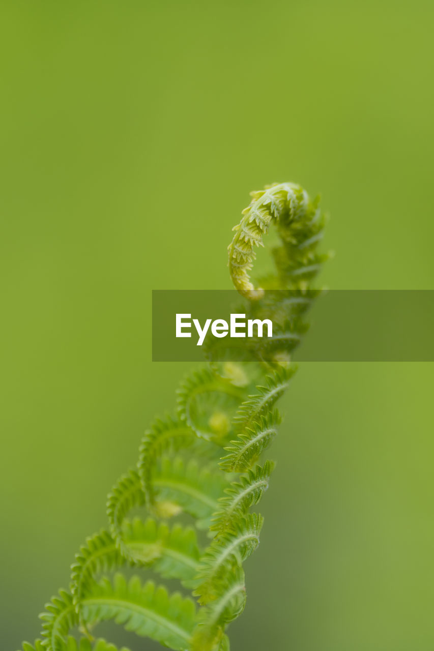 green color, growth, close-up, plant, beauty in nature, fern, nature, no people, day, focus on foreground, vulnerability, fragility, leaf, tendril, selective focus, plant part, outdoors, beginnings, spiral, tranquility