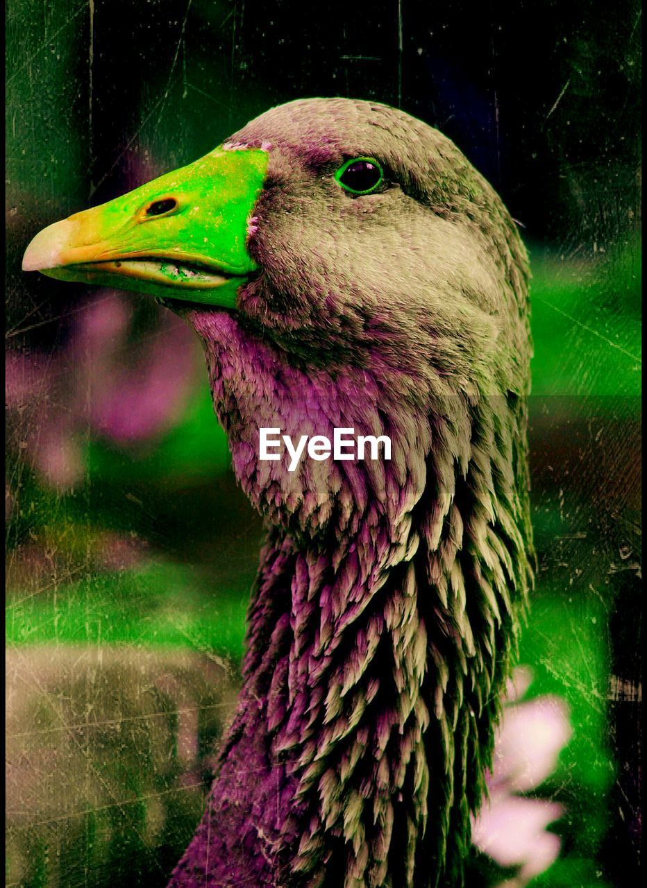 bird, one animal, beak, animal themes, animals in the wild, close-up, no people, nature, day, outdoors, tree, perching