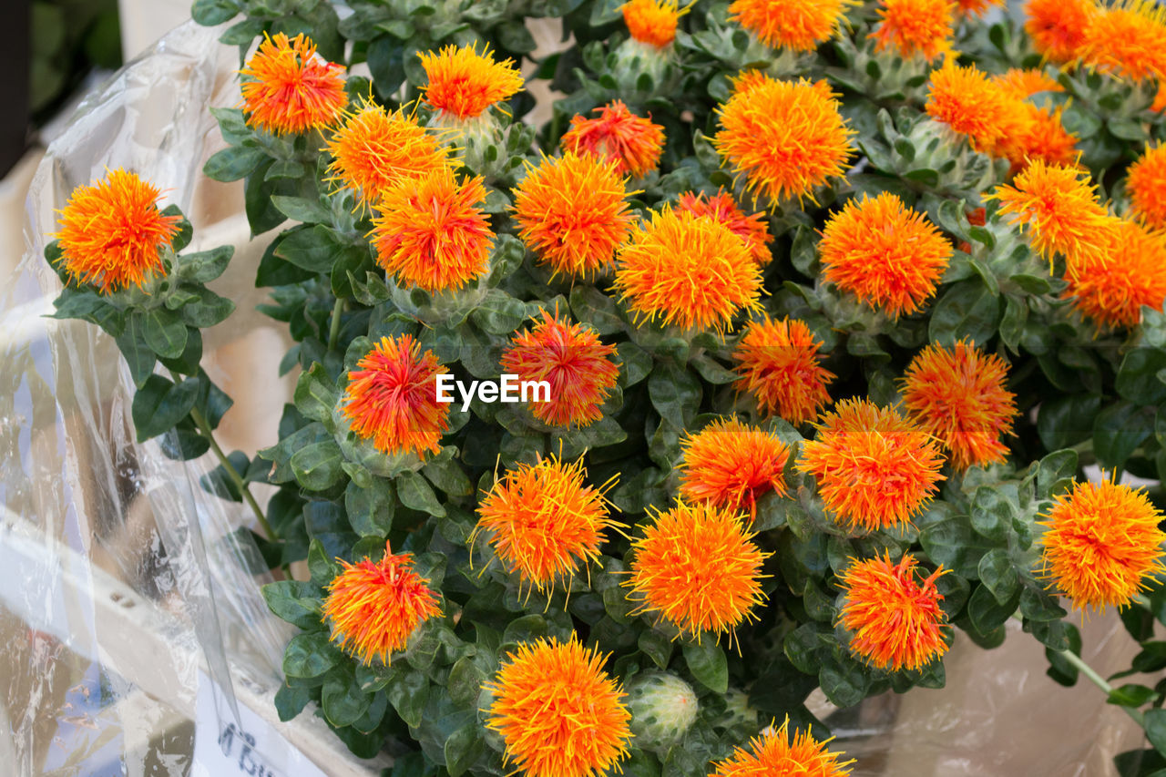 flower, freshness, fragility, beauty in nature, petal, flower head, nature, growth, orange color, for sale, high angle view, plant, day, retail, outdoors, blooming, springtime, close-up, no people, flower market, marigold