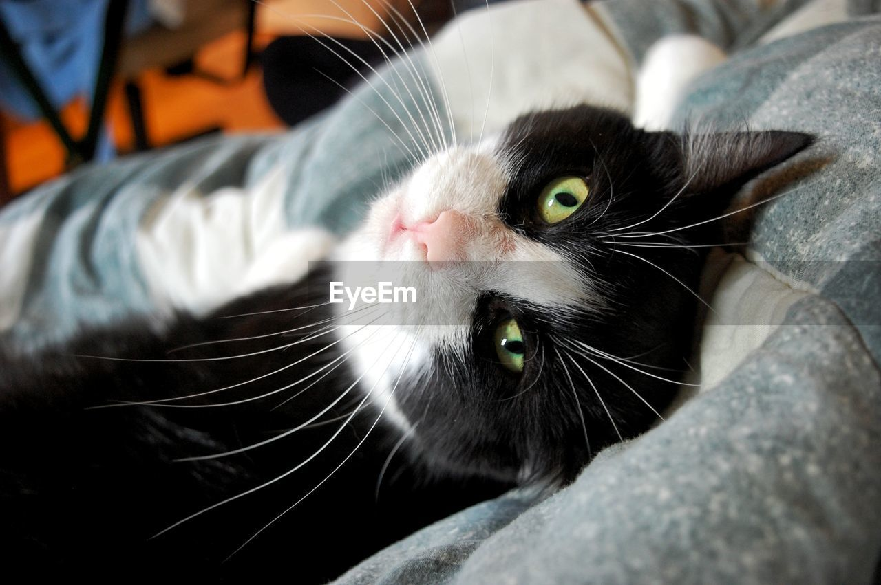 domestic, domestic cat, pets, domestic animals, cat, mammal, feline, one animal, vertebrate, whisker, close-up, portrait, looking at camera, people, animal body part, selective focus, relaxation, animal eye, yellow eyes