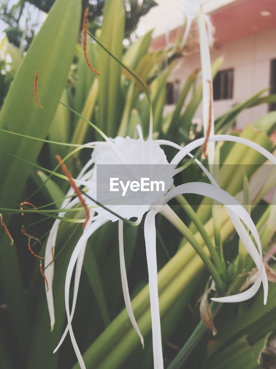 white color, growth, plant, flower, leaf, nature, outdoors, day, no people, green color, fragility, beauty in nature, close-up, flower head, freshness