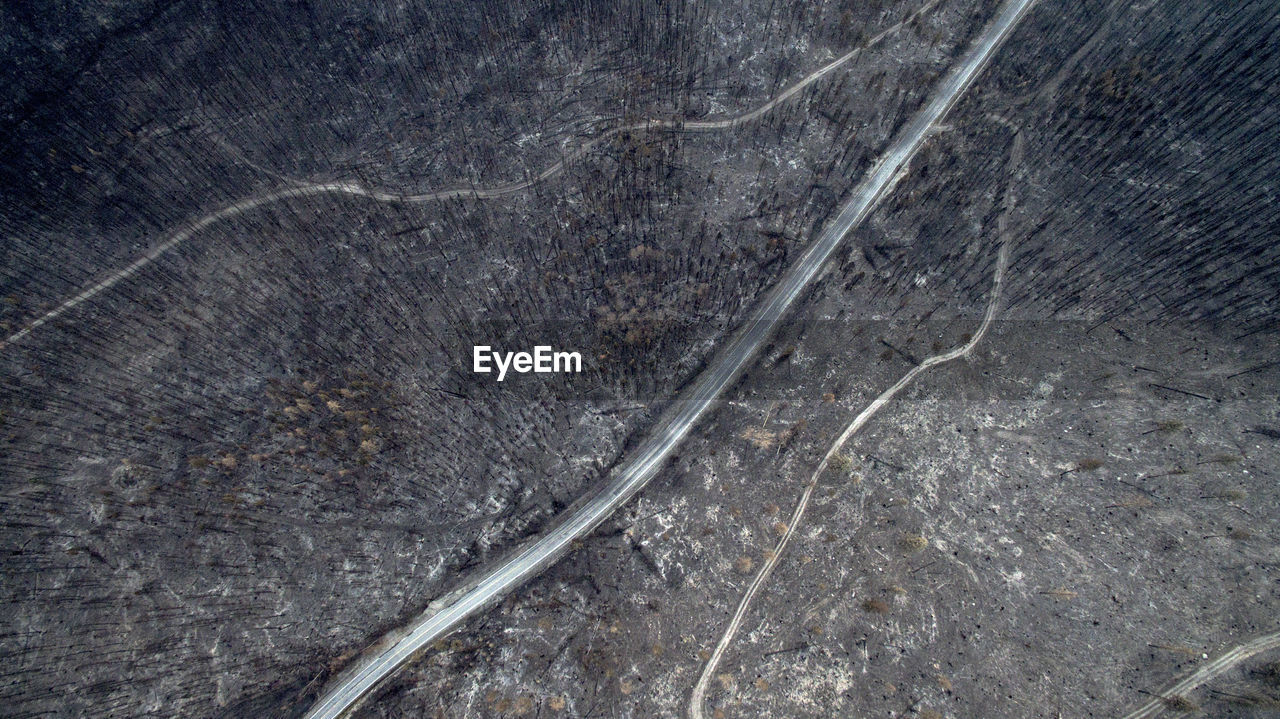 Aerial View Of Burnt Trees In Forest