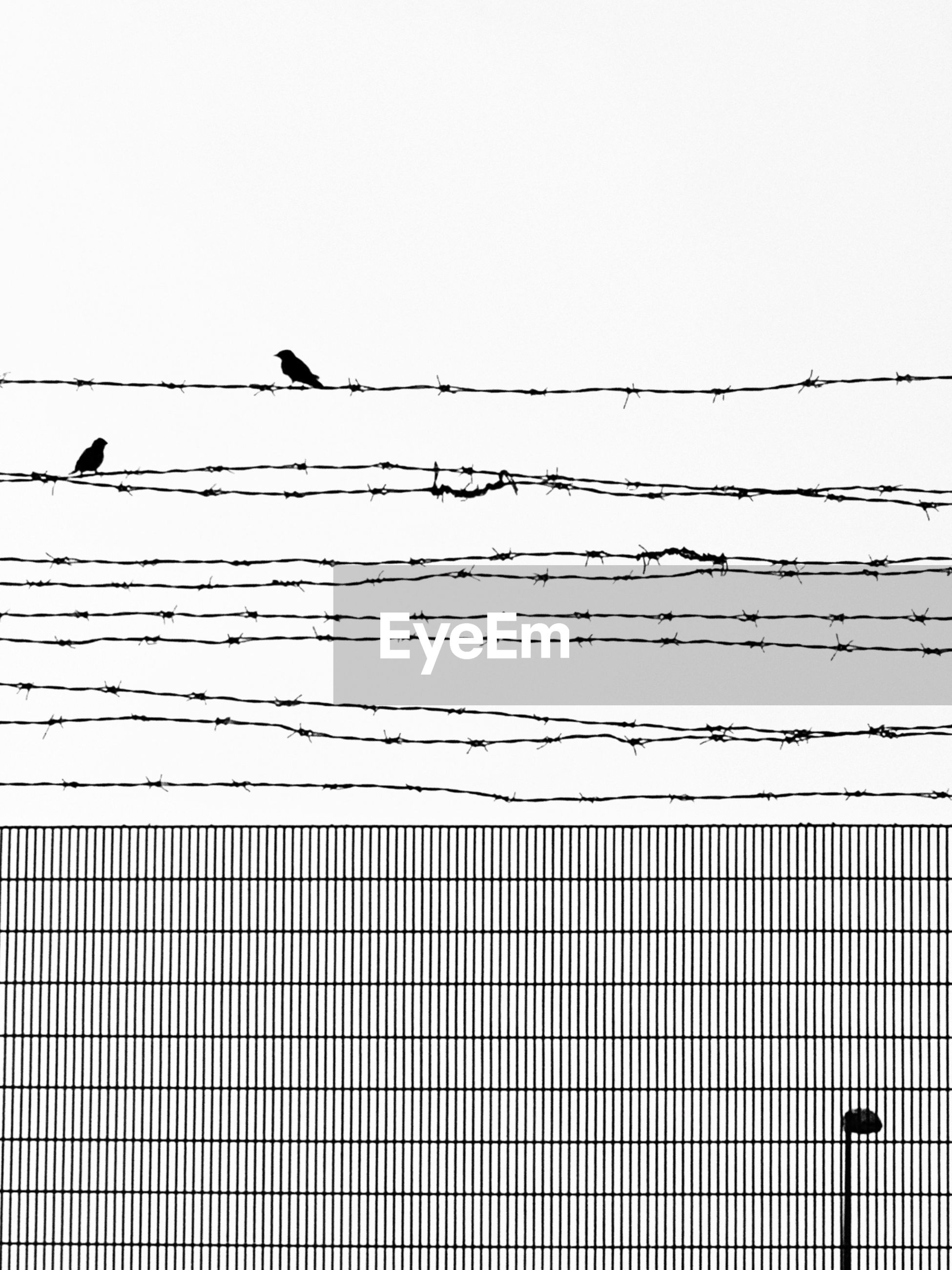 Low angle view of birds perching on barbed wire