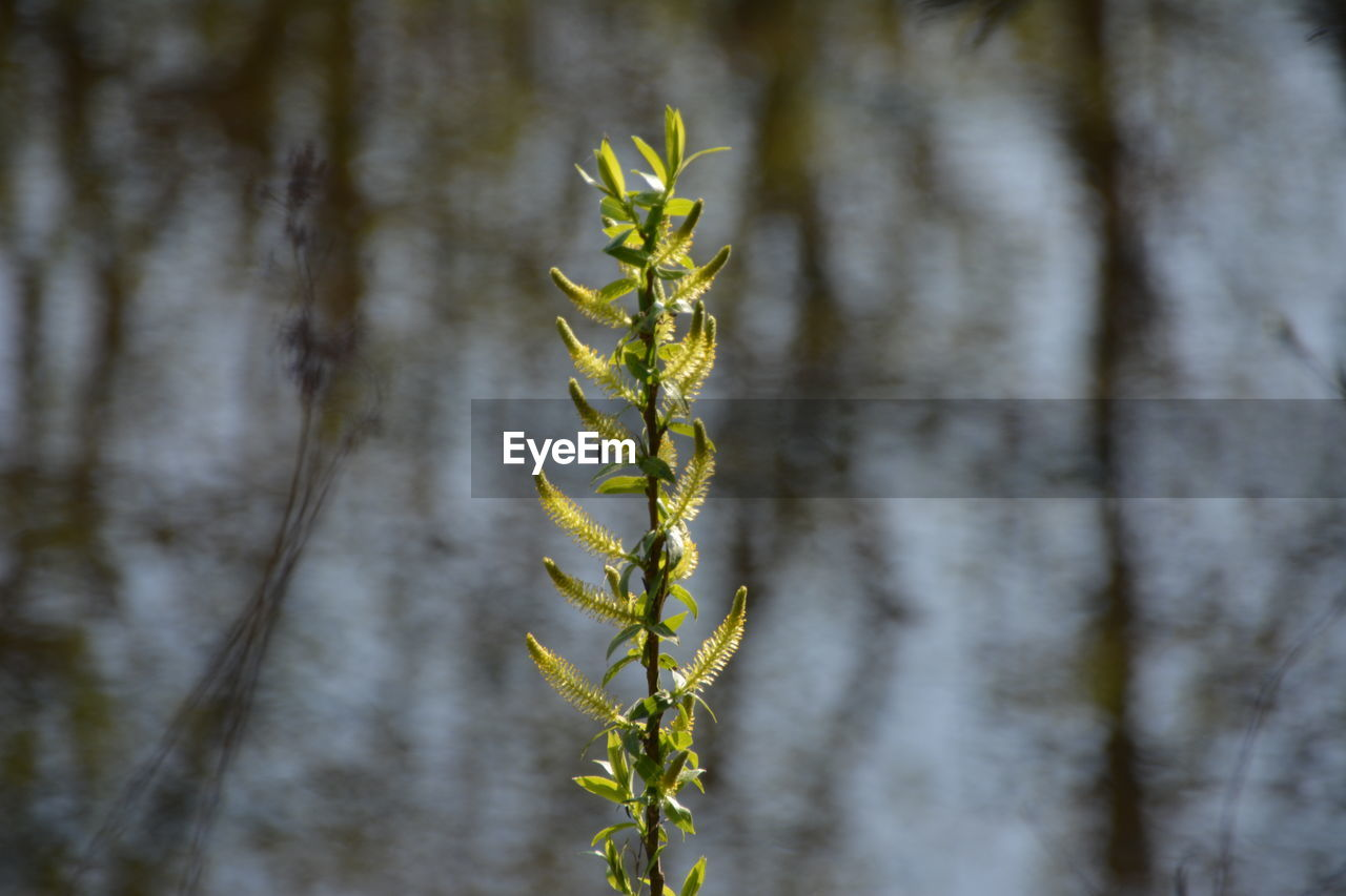 plant, growth, close-up, nature, no people, focus on foreground, day, beauty in nature, green color, outdoors, tranquility, vulnerability, fragility, selective focus, land, tree, wood - material, freshness, agriculture, plant stem, bamboo - plant